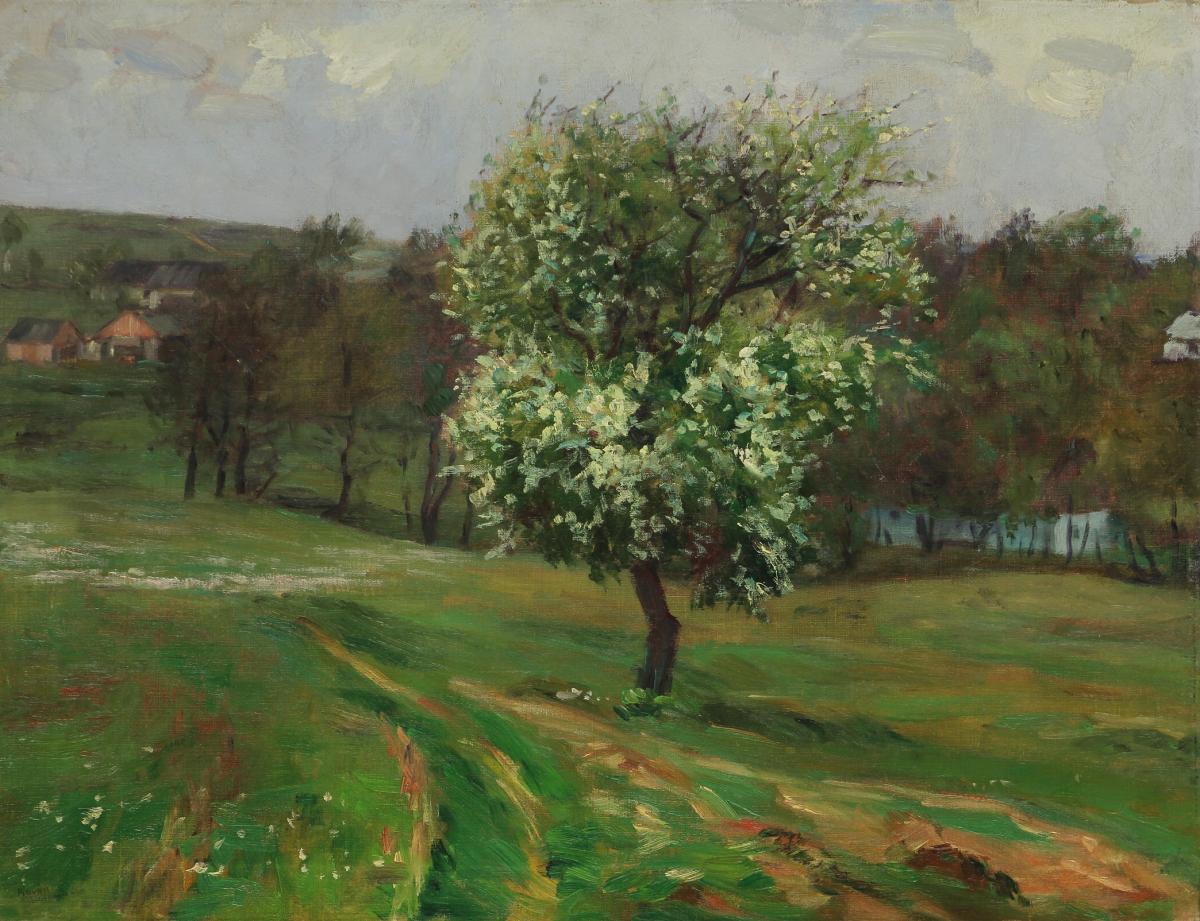 Stará střemcha na jaře